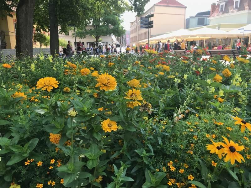 Blumenwiesen am Theaterplatz