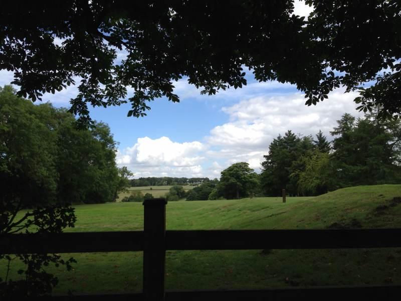 Grüne Wiesen, blauer Himmel