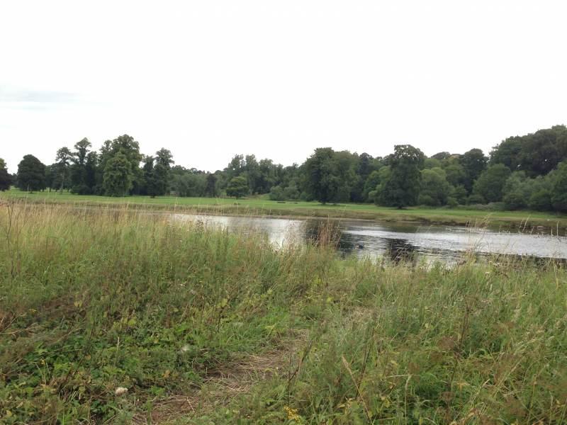 Natürliche Uferlandschaft