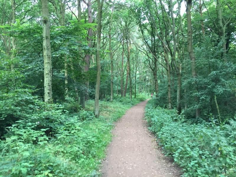 Gepflegte Waldwege