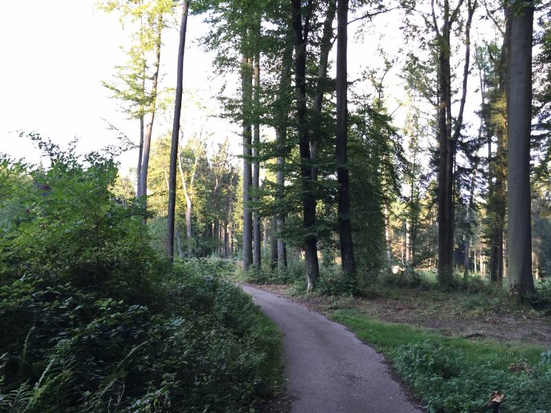 Wunderbare Waldwege