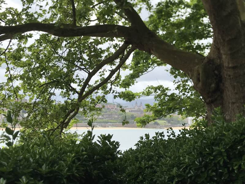 Faszinierender Blick durchs Blätterfenster