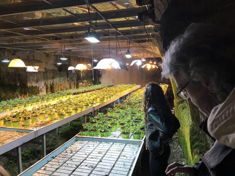 Unterirdische Pflanzenexperimente