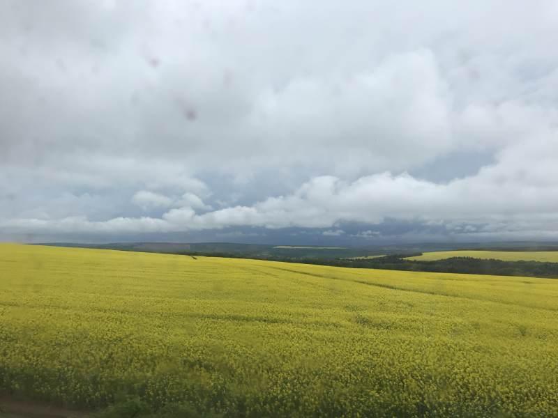 Felder, die sich bis zum Horizon erstrecken