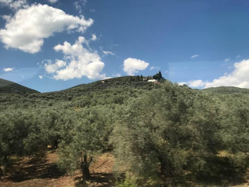 Olivenhaine wohin das Auge schaut