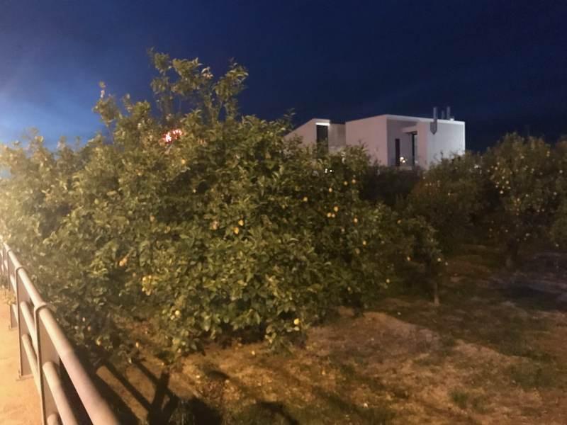 Angekommen in Kiato, Mandarinenbaum am nächtlichen Wegesrand